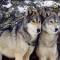 wolfgirl5618