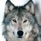 thewolf123